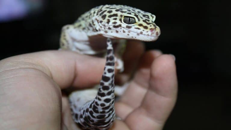 Best Reptile Pet for Kids and Small Children