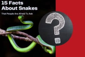 15 Facts About Snakes