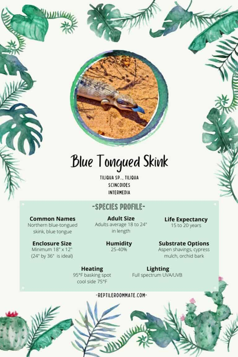 blue tongue skink profile