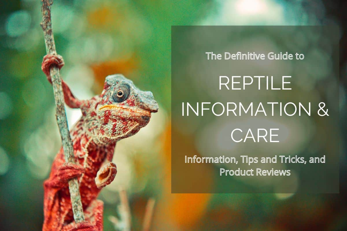 reptile roommate website cover photo